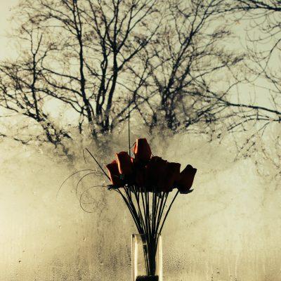 Rosas al amanecer